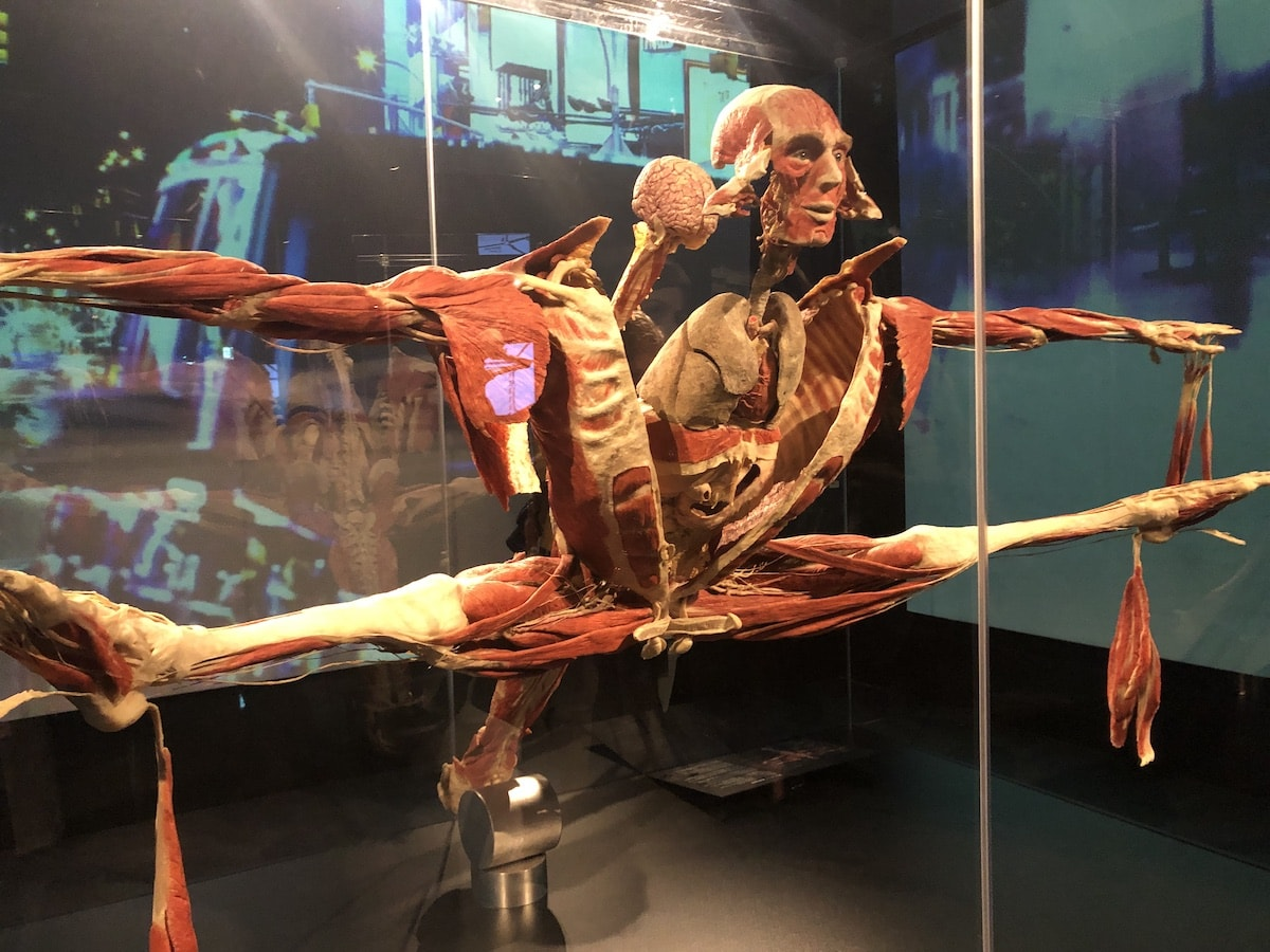 Body Worlds London Review